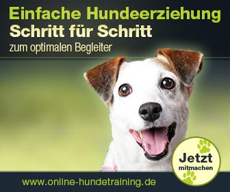 336x280 - Online Hundeschule