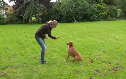 Spielen mit Hunden