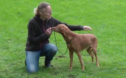 Kommunikation mit dem Hund