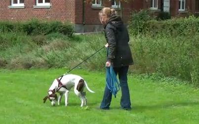 Fährtensuche mit Hunden