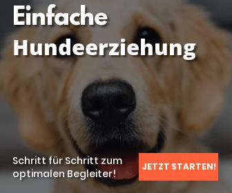 online hundetraining